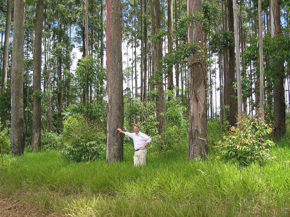 Rhinofloors forest Brasil